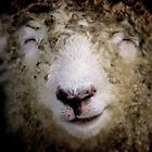 Smiling Sheep by Tamara  Kenneally