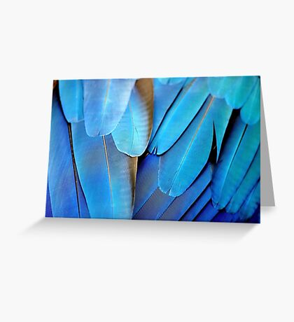 Blue and Gold Macaw Feathers Greeting Card
