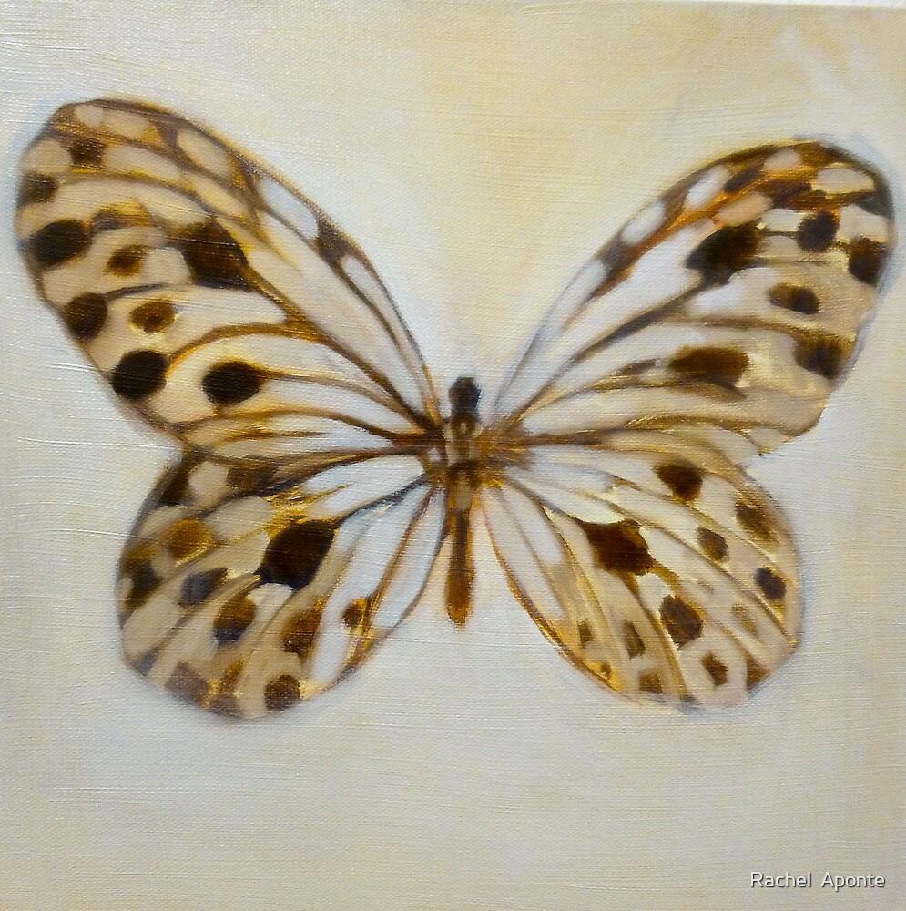 butterfly study by Rachel  Aponte