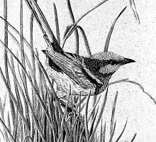 blue wren by Elizabeth Russell-Arnot