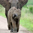 I CAN'T WALK FASTER! THE AFRICAN ELEPHANT – Loxodonta Africana - Afrika Olifant by Magriet Meintjes