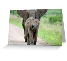 I CAN'T WALK FASTER! THE AFRICAN ELEPHANT – Loxodonta Africana - Afrika Olifant Greeting Card