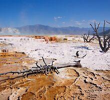 Mammoth Hot Springs 2 by Alex Preiss