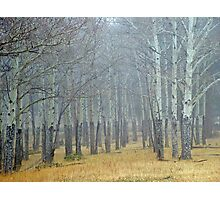 Aspen Fog Photographic Print