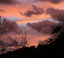 Dawn In The Bush by aussiebushstick
