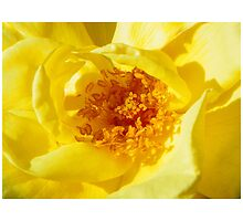 Bright Yellow Rose by mussermd
