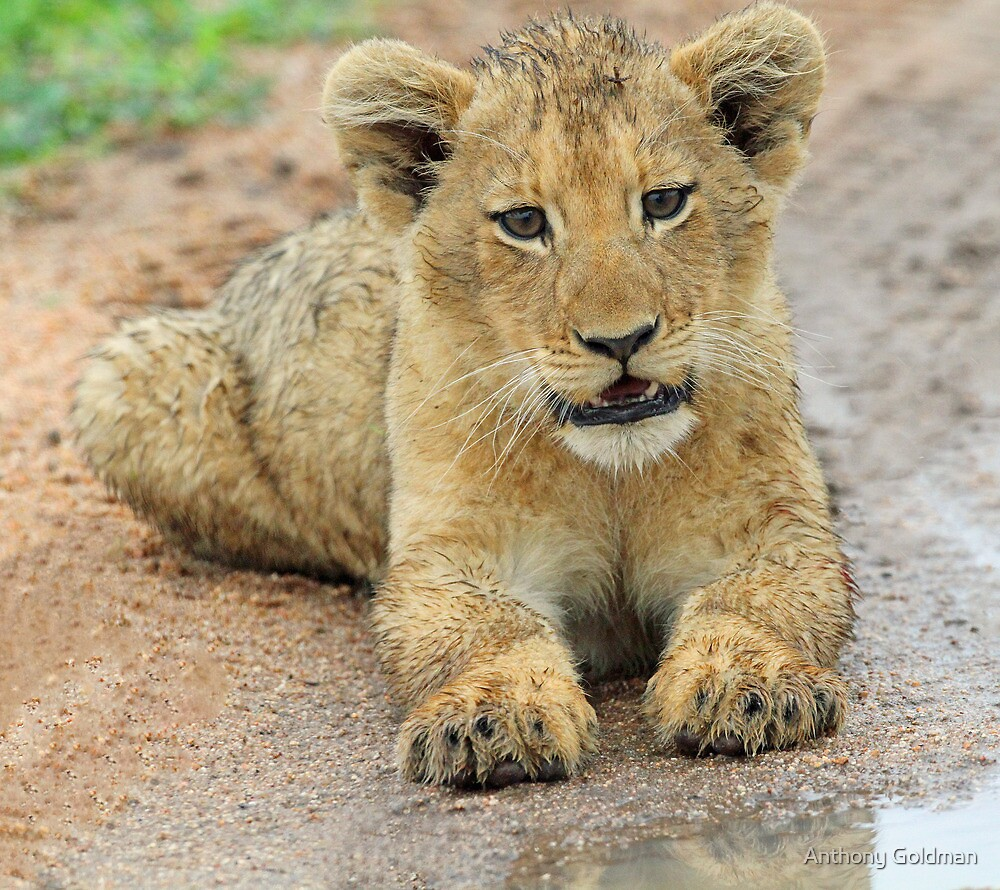 I am just adorable ,but i am wild !! by jozi1