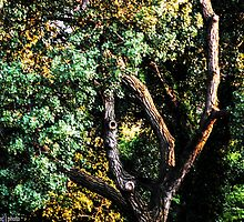 A Tree With Character by kgarlowpiper
