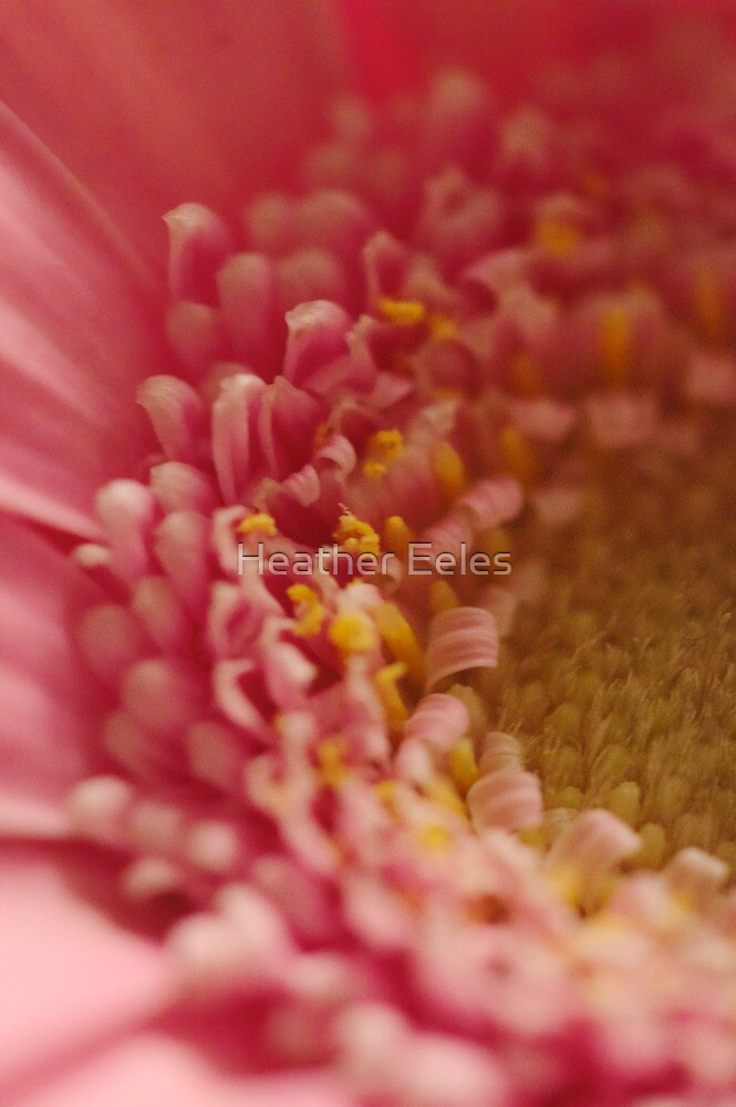 Partial Flowers  by Heather Eeles