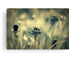 """""""Dreaming Fields of Flowers """" Canvas Print"""