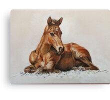 Jackie's Foal Canvas Print
