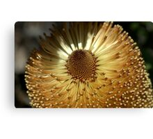 Banksia at Wittunga Canvas Print