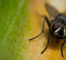 Fly On A Leaf #7 by Kerrod Sulter