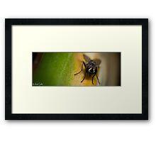 Fly On A Leaf #7 Framed Print