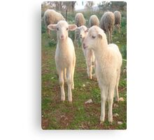 Three Tender Lambs and Five Pieces of Mutton Canvas Print