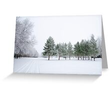Can't See The Forest For The Trees Greeting Card