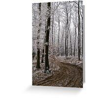 Frosty sylvan walk Greeting Card