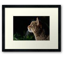 Scottish Wildcat Framed Print