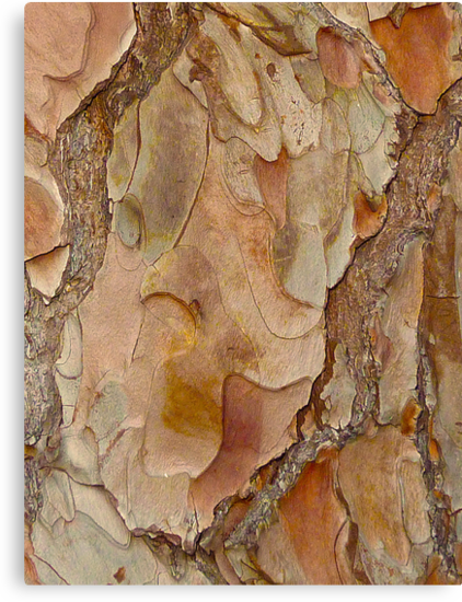 Bark Abstract  by Sharon Brown