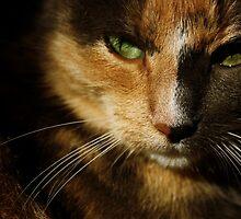 Cat by Alex Ottosson