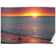 I seeagull sunset.. Poster