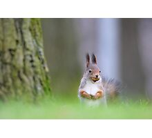 Red squirrel with acorn Photographic Print