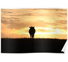 Moooving Sunset Poster