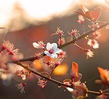 Morning Bloom by Stevo & Chanel