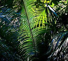 Queens Park Palm by Rhoufi