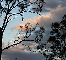 Dusk In The Bush by aussiebushstick
