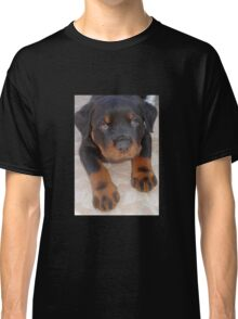 Young Male Rottweiler Making Eye Contact Classic T-Shirt