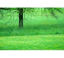 In A Green Field Photographic Print