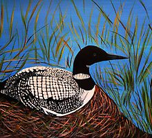 Loon on  the nest  by maggie326