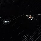 Spider IT - Web Building by Daniel Carr