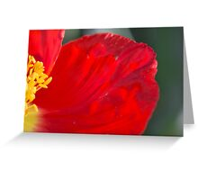 Red Poppy #2 Greeting Card
