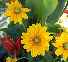 Flowers Beauty by Jocelyne Choquette