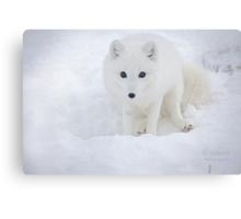 Arctic fox / Vulpes lagopus Canvas Print