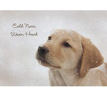 Cold Nose Warm Heart Photographic Print