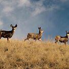 Doe a Deer, A Female Deer by © Loree McComb