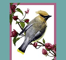 Waxwing on crabapple branch thank you card by Charmaine Diedericks