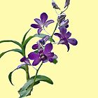 Purple Cymbidium Orchids for iPhone by Roland Pozo