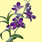 Purple Cymbidium Orchids for iPad by Roland Pozo
