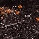 Day Lillies by Yukondick