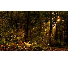 Autumn Woodland Photographic Print
