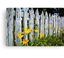 Wood Fence And Daffodils Poster Print And Card Canvas Print