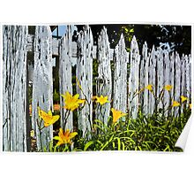 Wood Fence And Daffodils Poster Print And Card Poster