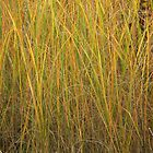 Brilliant Grasses by Deb Fedeler