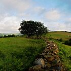 Tree Pano. by Roly01
