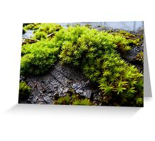 Moss Defined Greeting Card