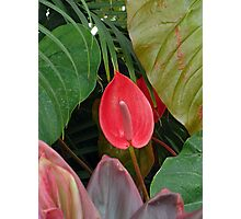 Anthurium Study  Photographic Print